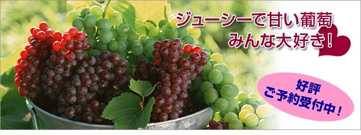 ジューシーで甘い葡萄はみんな大好き!
