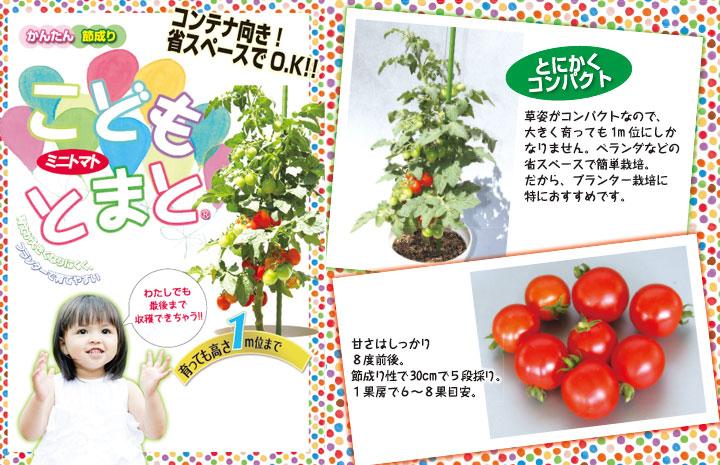 こどもトマト