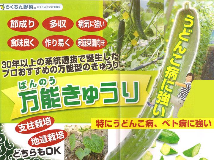 ソムリエ野菜:万能きゅうり