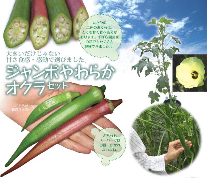 ソムリエ野菜:ジャンボやわらかオクラ