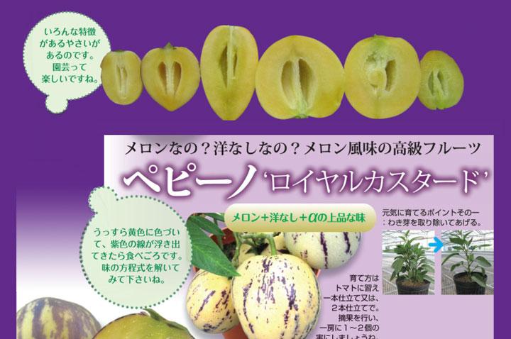 ソムリエ野菜:ペピーノ