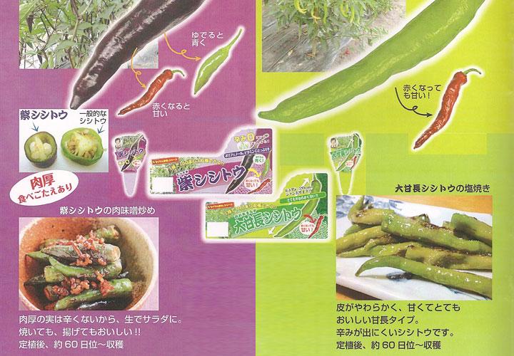 ソムリエ野菜:よくばりシシトウ