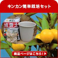 キンカン簡単栽培セット
