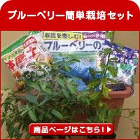 ブルーベリー簡単栽培セット